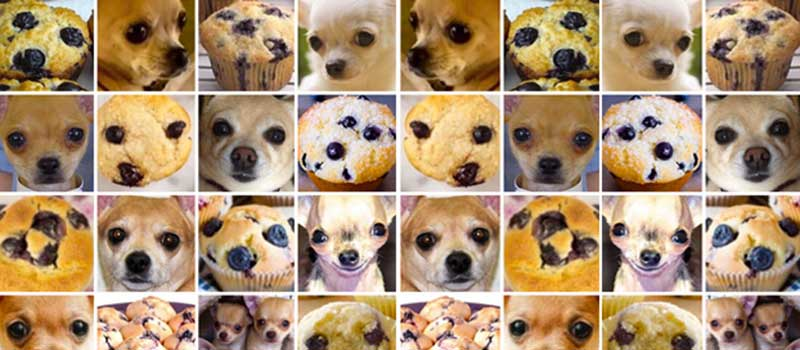 Chihuahua vs. Muffin: Comparing Computer Vision APIs